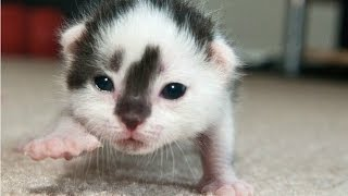 Cute Newborn Kittens Learning To Walk Compilation || NEW HD