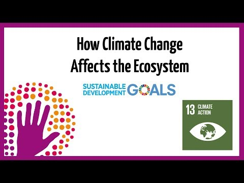 How Climate Change Affects the Ecosystem