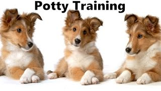 How To Potty Train A Collie Puppy - Collie House Training Tips - Housebreaking Collie Puppies Fast