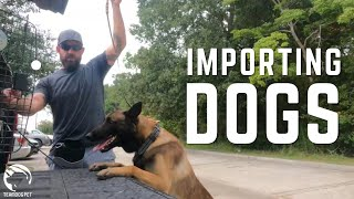 Importing Protection Dogs