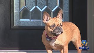 Charlotte family reunites with dog 6 months after it was stolen