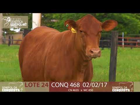 LOTE 24 CONQ 468
