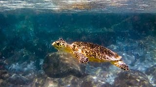 Snorkeling in St. John, United States Virgin Islands with Sea Turtle