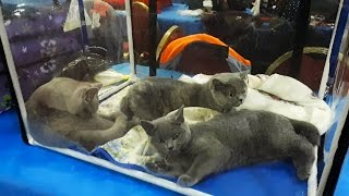 Выставка животных : кошки , собаки.......