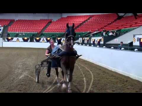 Carriage Horse at the Big E Coliseum,...
