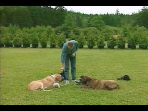 The Shocking Truth About Treat Training - Don Sullivan The DogFather