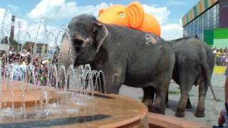 Слоны на улице Омска. Слоны из цирка. Батуты. Гуляю с Даней. Не жизнь а малина.