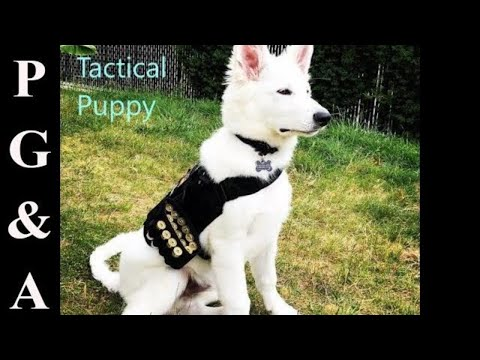 DOG TACTICAL HARNESS// UNBOXING ONETIGRIS APOLLO 9 HARNESS + GEAR