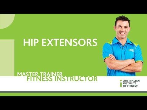 Hip Extensors
