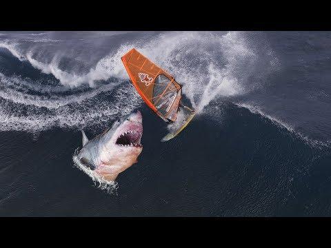 Horrorfund in Frankreich!: Menschenarme in Hai gefunden!