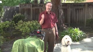 Megga dog series 30000 - Intro to Psychology