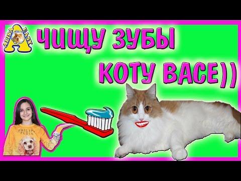 Вопрос: Имеет ли смысл и если да, то как, обрабатывать зубы кота?