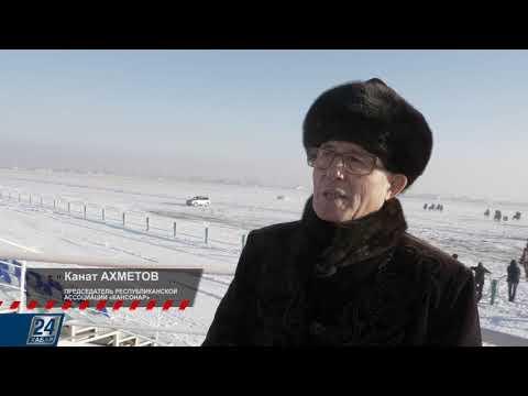 Казахская борзая (тазы) | Олимп