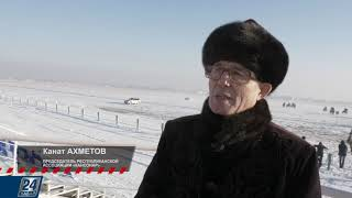 Казахская борзая (тазы)   Олимп