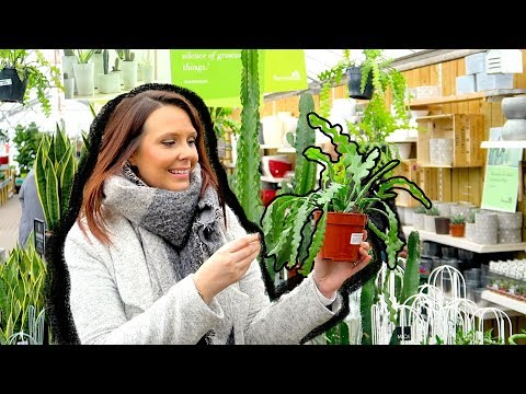 LETS GO HOUSE PLANT SHOPPING!