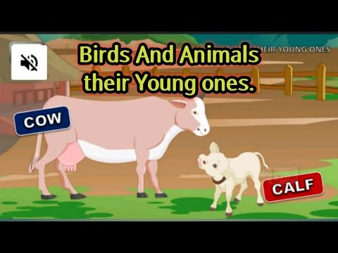 Birds and Animals ,their Young Ones