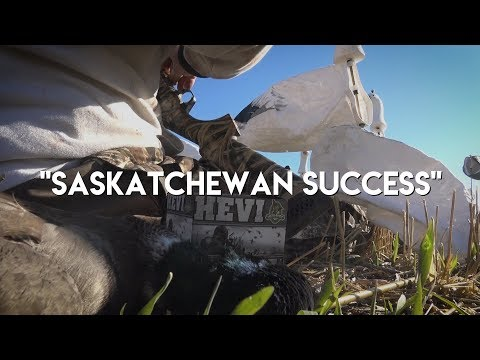 SASKATCHEWAN SUCCESS - Canada Waterfowl Hunting
