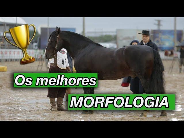 MORFOLOGIA: os melhores da FICCC 2018