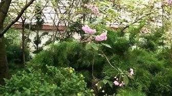 The Japanese Garden at Viherpaja