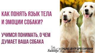 Как понять язык тела и эмоции собаки? Учимся понимать о чем думает ваша собака