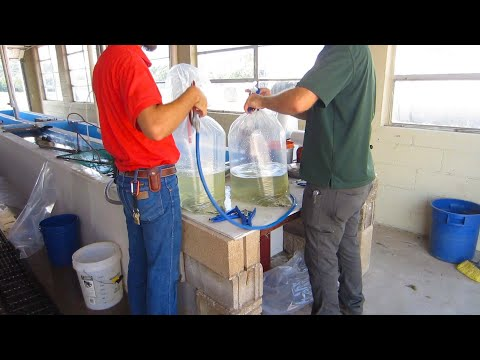 Let's Stock The Pond! (for Free) | Oklahoma Ranch Life
