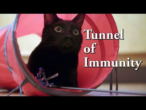 N2 The Talking Cat S4 EP26 - Tunnel of Immunity