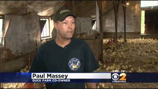 End Of An Era For Long Island Duck Farm