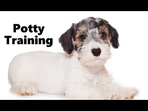 How To Potty Train A Sealyham Terrier Puppy