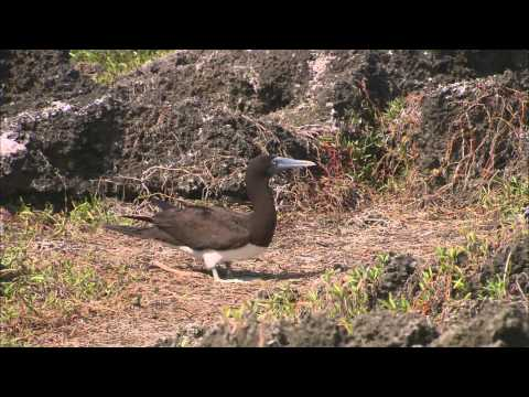 The Birds Of Christmas Island
