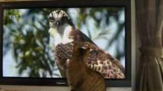 NHKのさわやか自然百系というテレビ番組。さくらの一番のお気に入りです。