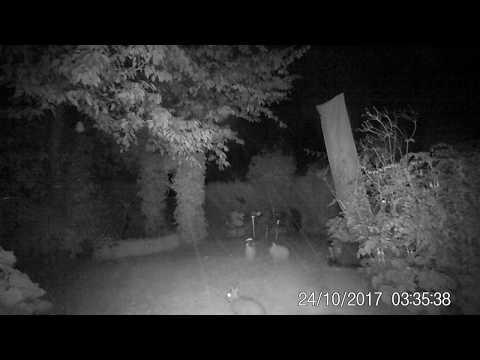 Nachtelijk konijn in tuin Reuver