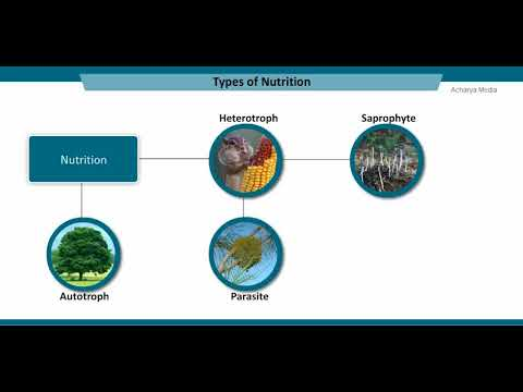 10th Biology Ch 6 Lesson 1   Nutrition in Plants