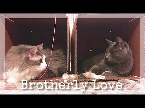 Brotherly Love | Episode 1 | Cats playing