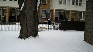 Snow Peis!