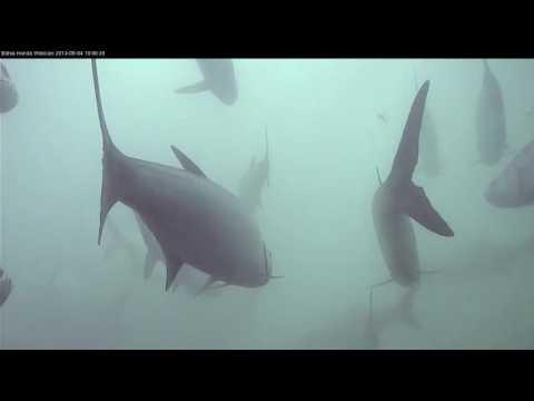 Bahia Honda State Park Underwater Live Webcam