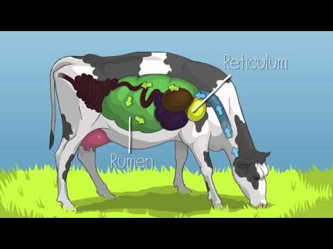 Mobile Dairy Classroom: Learn About Cattle Eating Habits and Cow Digestion, Grades 4-6