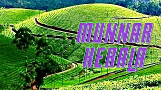 Munnar Beautiful Tea Gardens Kerala India *HD* മുന്നാർ