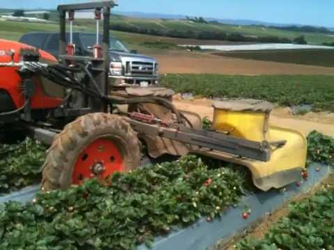 C&N Tractors  Strawberry Bug Vacuum