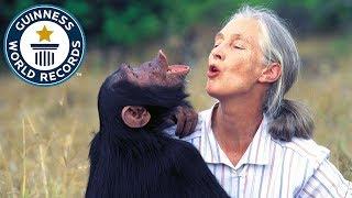 Jane Goodall Institute: Longest running chimpanzee study - Meet The Record Breakers