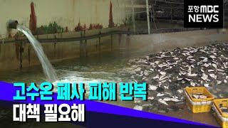 고수온에 어류 폐사 피해 반복.. 대책 시급 (2021…