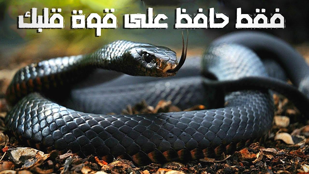 أخطر الثعابين في العالم | لم تسمع عنها في حياتك من قبل!!