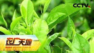 《农广天地》 20190507 怪猪奇茶| CCTV农业