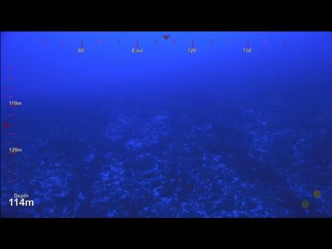 ROV SuBastian Dive 082 - Carondelet Reef -Deep Sea Corals of PIPA