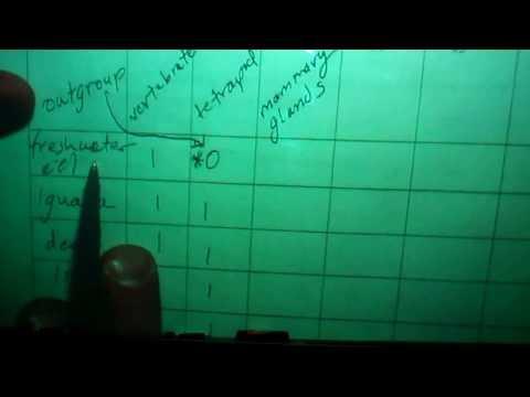 Cladistics note-taking