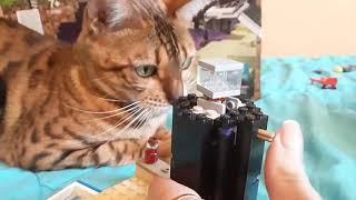 Майнкрафт, лего, minecraft, lego, бенгал,  bengal, бенгальская кошка,  bengal cat