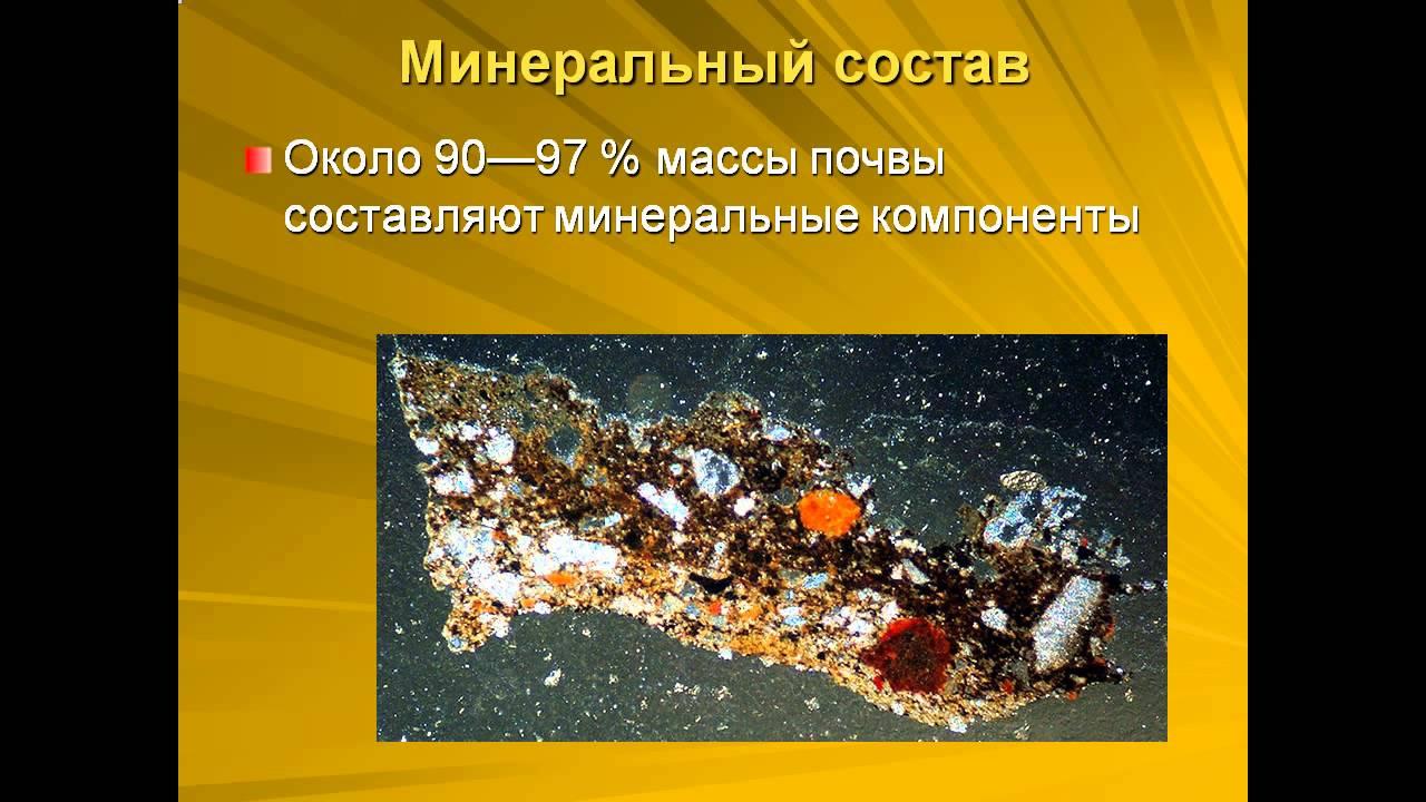 живые ископаемые презентация
