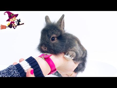 Peppa Pig Adopta a un Adorable Conejito y Aprende a Cuidarle