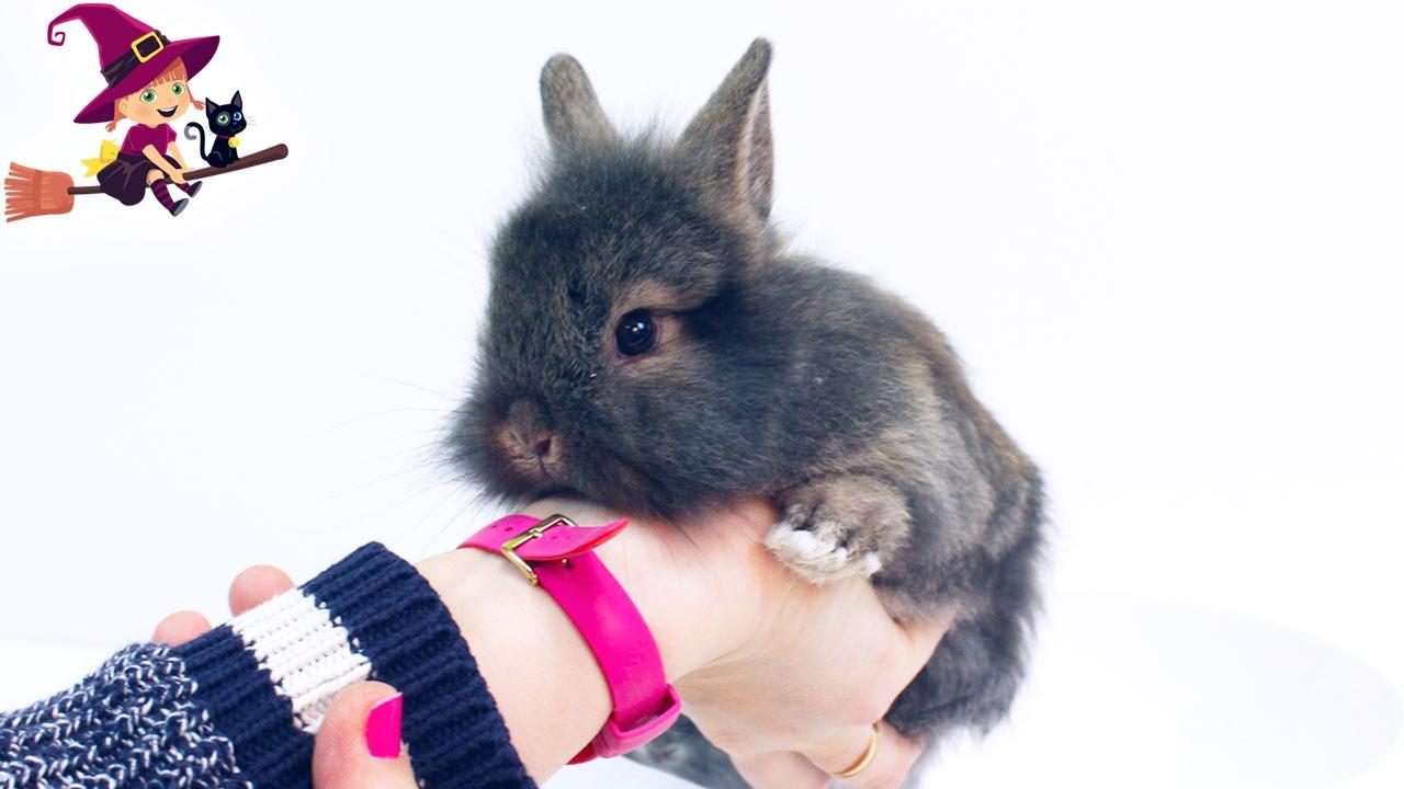 Adopta Aprende Un Peppa Conejito Adorable Y A Pig Cuidarle QCtshdrx
