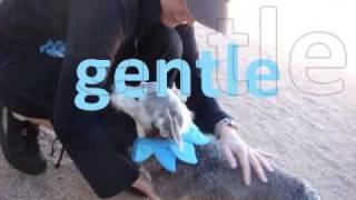 Ernie The Adorable Corgi Terrier Mix