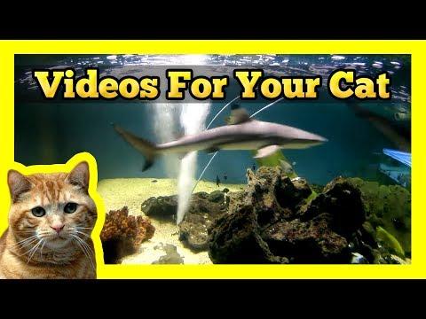 Videos for your Cat - Shark Tank (White & Black Tipped Sharks)